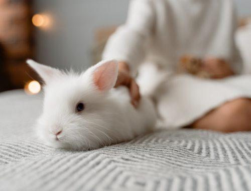 prendre soin de son lapin